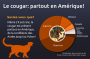 cougar_infographique.png